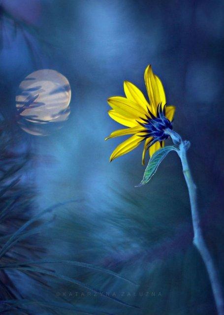 Florile ochilor mei: Picturi din sanul naturii - Poza 16