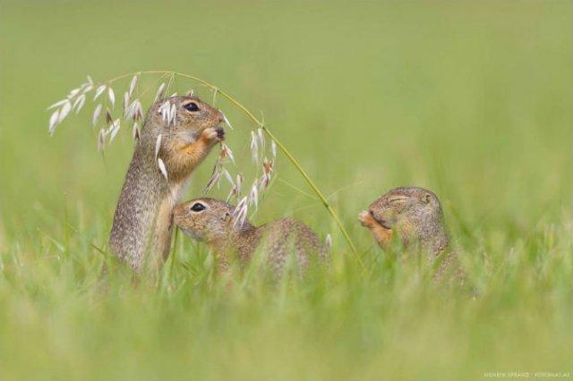 Rozatoare adorabile, intr-un pictorial haios - Poza 1