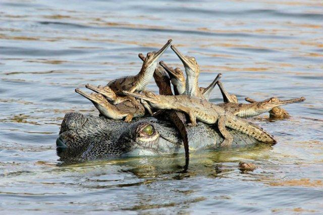 Lumea animalelor, in poze de familie - Poza 13