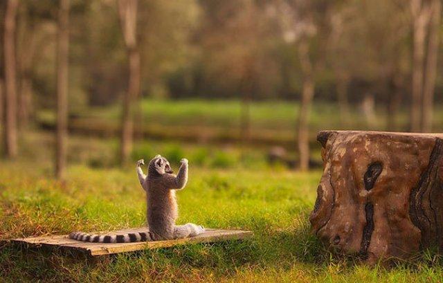 Cele mai haioase poze cu animale - Poza 15