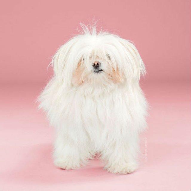 Unul mai cochet ca altul: Tunsori canine cu influente asiatice - Poza 15