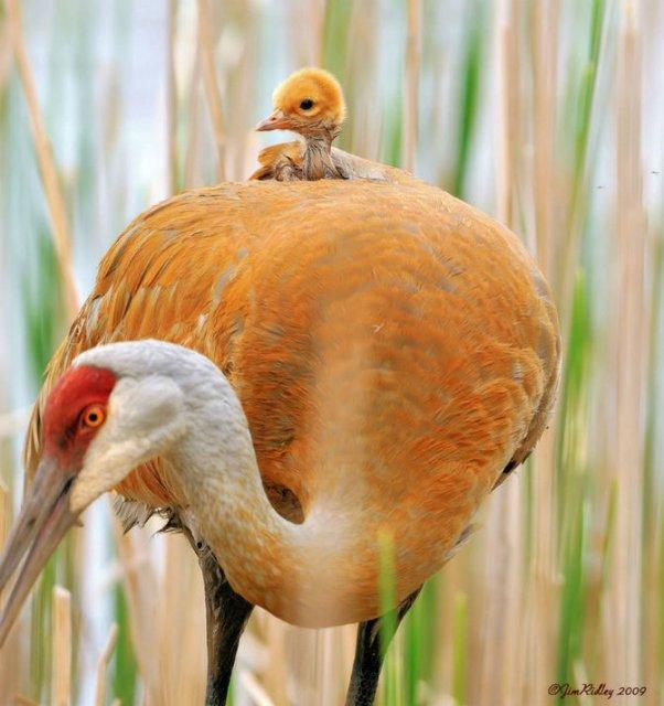 Lumea animalelor, in poze de familie - Poza 12