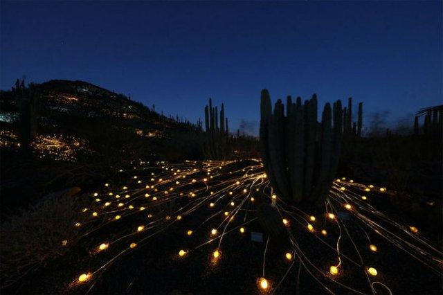 Campul luminii: O experienta luminoasa energizanta - Poza 8
