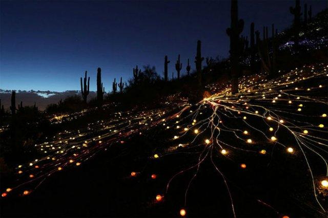 Campul luminii: O experienta luminoasa energizanta - Poza 9