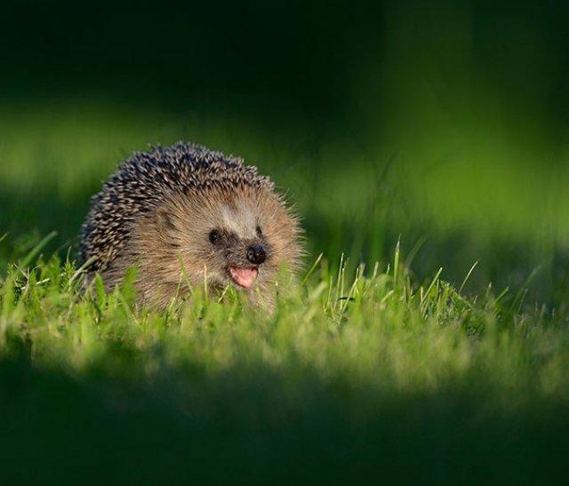 Cele mai simpatice animale zambarete - Poza 13