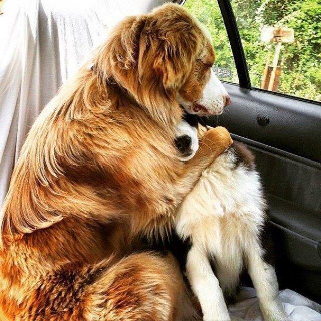Prieteni de nedespartit, in poze duioase - Poza 12