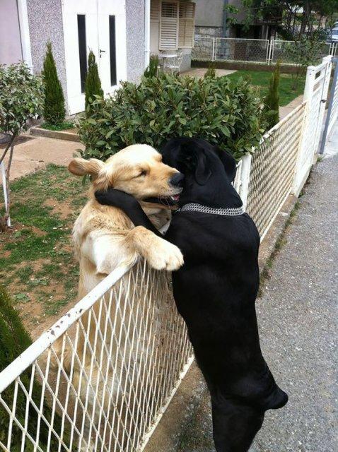 Prieteni de nedespartit, in poze duioase - Poza 13