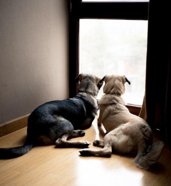 Prieteni de nedespartit, in poze duioase - Poza 8