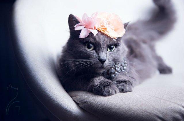 Cea mai cocheta pisica, in poze de colectie - Poza 6