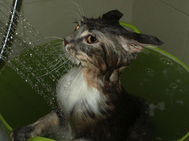 Pisici la apa, in poze haioase - Poza 10