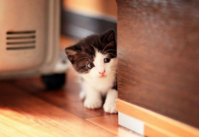 13 Pisicute care iti vor insenina ziua - Poza 11