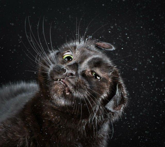 Imagini haioase cu pisici in miscare