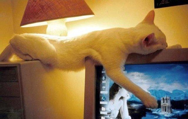 17 Pisici care dorm in cele mai haioase pozitii - Poza 4