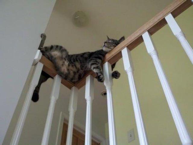 17 Pisici care dorm in cele mai haioase pozitii - Poza 5