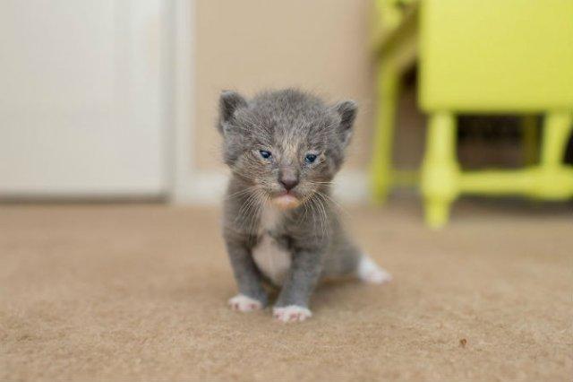 Cei mai simpatici pui de pisica, in cautare de stapan - Poza 10