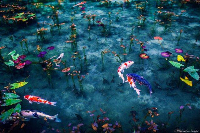 Uimitoarea Japonie, in sezonul ploios - Poza 10