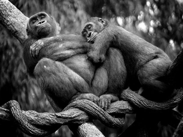 Dragostea pluteste in aer: Tandrete in lumea animala - Poza 16