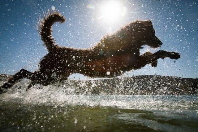 Cei mai trasniti caini si vara lor de neuitat - Poza 12
