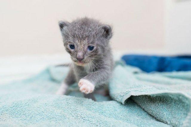 Cei mai simpatici pui de pisica, in cautare de stapan - Poza 9
