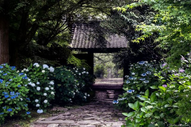 Uimitoarea Japonie, in sezonul ploios - Poza 9