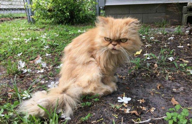 Garfield, cel mai simpatic motan incruntat - Poza 7