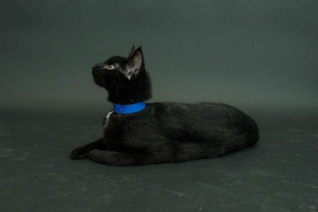 Proiectul pisicii negre: Cele mai frumoase pisicute fara stapan - Poza 13