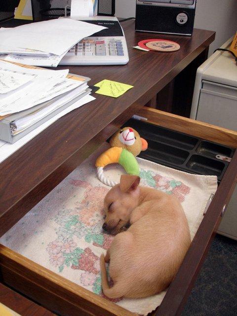 Cele mai haioase pozitii in care dorm animalele - Poza 19