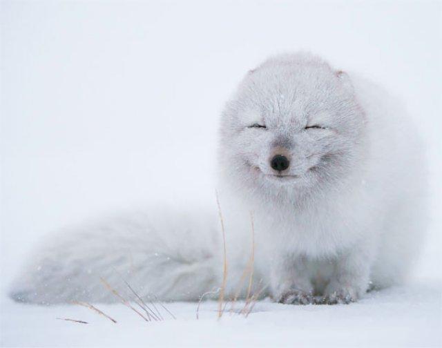 Cele mai simpatice animale zambarete - Poza 12