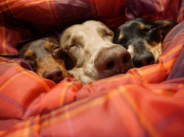 Trei prieteni de nedespartit, in poze adorabile - Poza 11