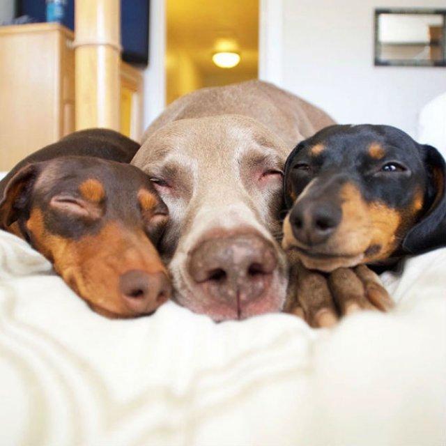 Trei prieteni de nedespartit, in poze adorabile - Poza 7