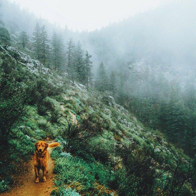 Aventurile epice ale lui Aspen, retrieverul hoinar - Poza 15