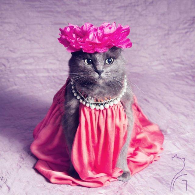 Cea mai cocheta pisica, in poze de colectie - Poza 1