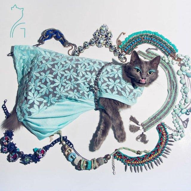 Cea mai cocheta pisica, in poze de colectie - Poza 5