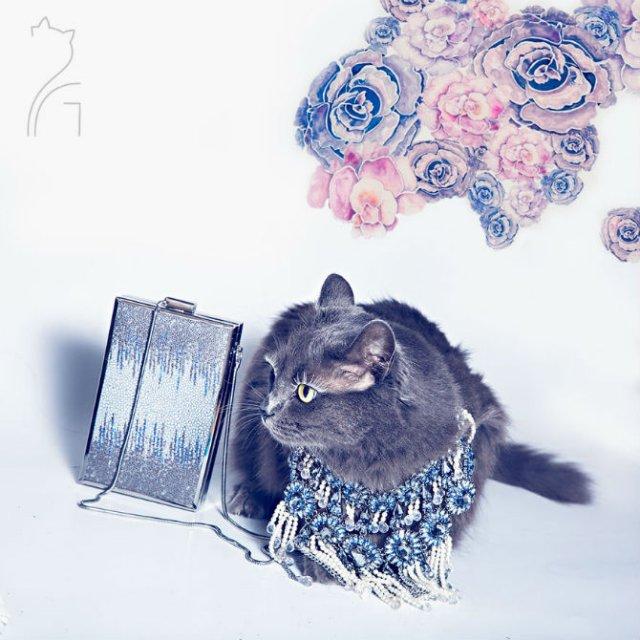 Cea mai cocheta pisica, in poze de colectie - Poza 7