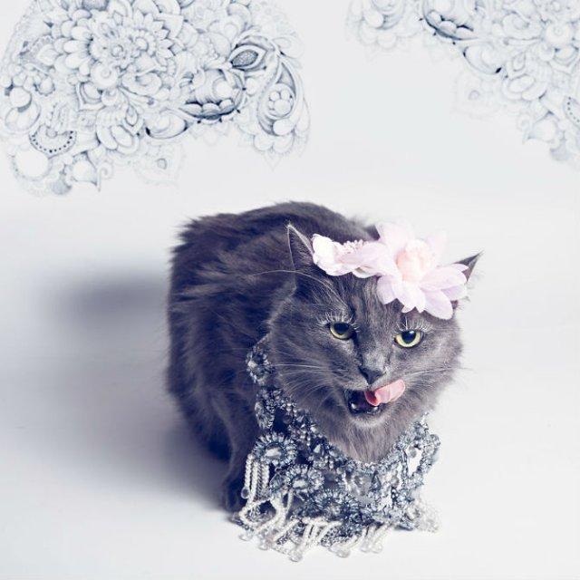 Cea mai cocheta pisica, in poze de colectie - Poza 8