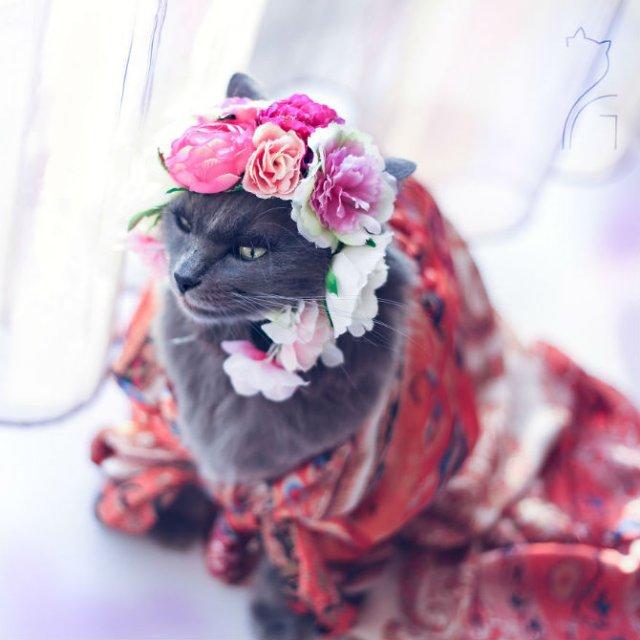 Cea mai cocheta pisica, in poze de colectie - Poza 9