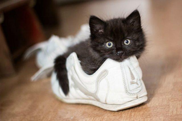 13 Pisicute care iti vor insenina ziua - Poza 10