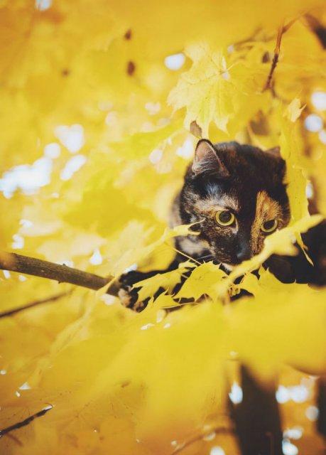 Plimabrea pisicii multicolore prin patru anotimpuri - Poza 11