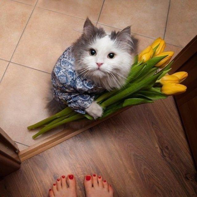 20+ Poze amuzante cu pisici naravase - Poza 11