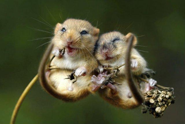 Dragostea pluteste in aer: Tandrete in lumea animala - Poza 15
