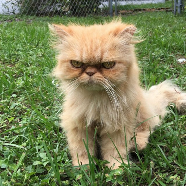 Garfield, cel mai simpatic motan incruntat - Poza 1