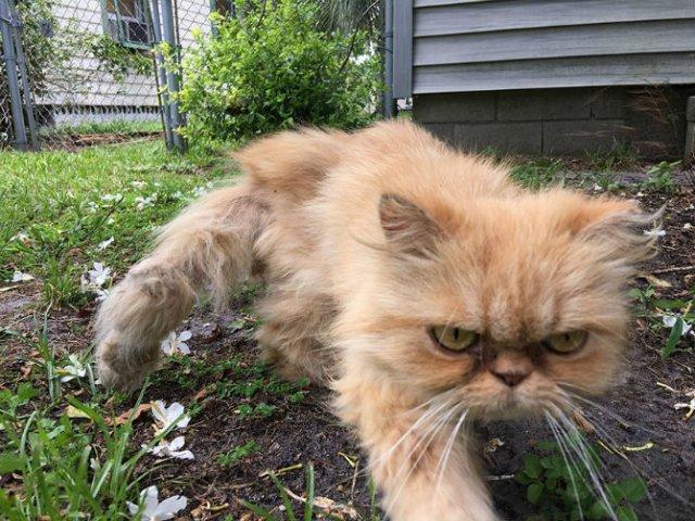 Garfield, cel mai simpatic motan incruntat - Poza 5