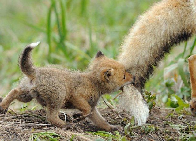 Lumea animalelor, in poze de familie - Poza 11