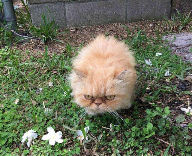 Garfield, cel mai simpatic motan incruntat - Poza 2