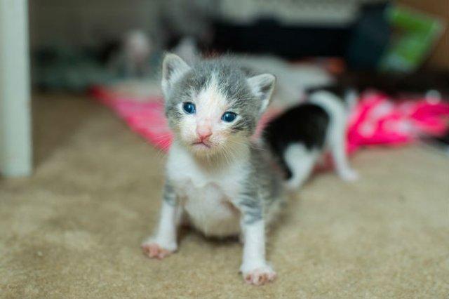 Cei mai simpatici pui de pisica, in cautare de stapan - Poza 8
