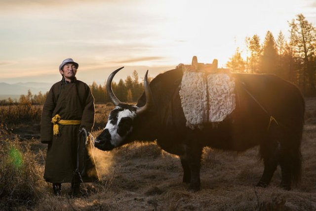 Oameni si reni, in inima Mongoliei - Poza 3