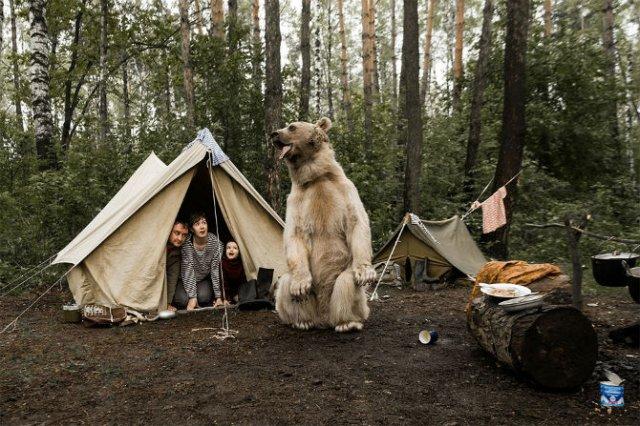 Cel mai simpatic urs, intr-o poveste de familie - Poza 3