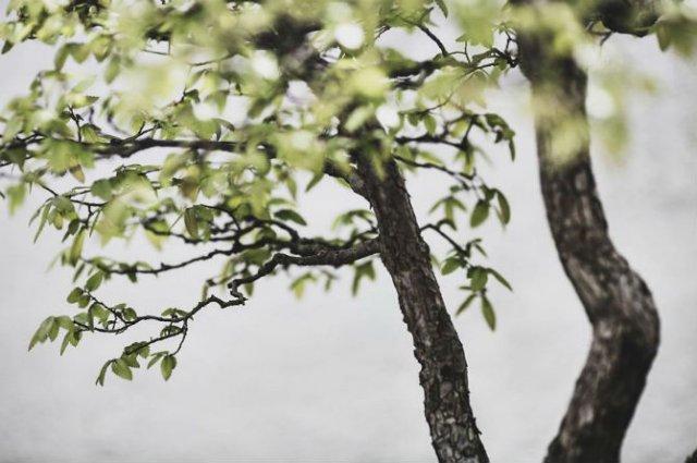 Unicitatea bonsailor, intr-un pictorial superb - Poza 9