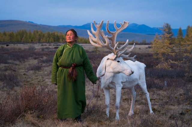 Oameni si reni, in inima Mongoliei - Poza 1