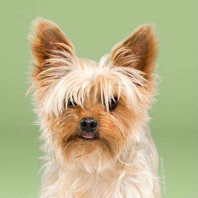 Unul mai cochet ca altul: Tunsori canine cu influente asiatice - Poza 13